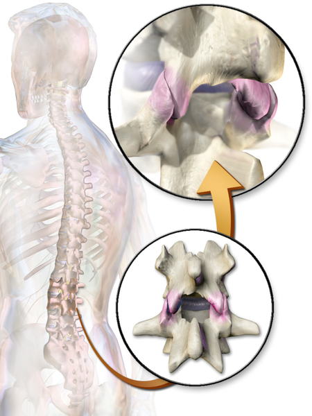 File:Facet Joints.png