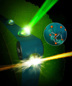 X-Rays Capture Unprecedented Images of Photosynthesis in Action