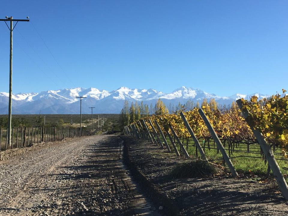 Vineyards at Moet Hennessy's Chandon estates in Mendoza, Argentina.