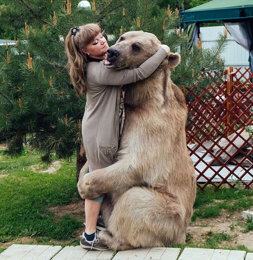 http://www.boredpanda.com/adopted-bear-russian-family-stepan/?image_id=adopted-bear-russian-family-stepan-a13.jpg