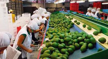 Agroexportaciones no tradicionales crecieron 22.2% de enero a julio del 2021
