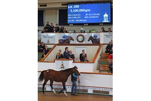 The session-topping Frankel colt consigned as Lot 288 in the ring at Tattersalls