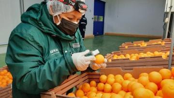 Perú está próximo a concretar la exportación de  cítricos y arándanos a la India