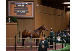 The Flatter colt consigned as Hip 250 in the ring at the Keeneland September Sale