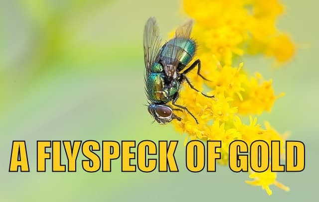 A Flyspeck of Gold