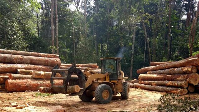 INPE: Mais de 10 mil km² foram desmatados na Amazônia entre 2018 e 2019
