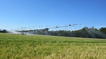 Irrigation system in paddock