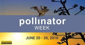 Pollinator Week 2016 is June 20 through June 26.