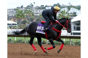 Sharp Azteca training for the Breeders' Cup at Del Mar