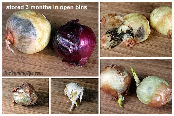 How to Store Onions, Garlic, & Shallots 6010