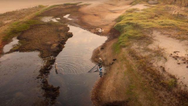 Operação de resgate de peixes no Rio Paraná
