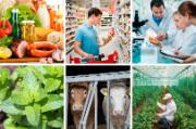 6 pictures: groceries on a wooden table, man in supermarket, group of people working in a laboratory, mint plant, cows inside a farm, man in a greenhouse plantation