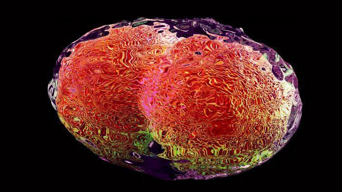 Virus de la variole