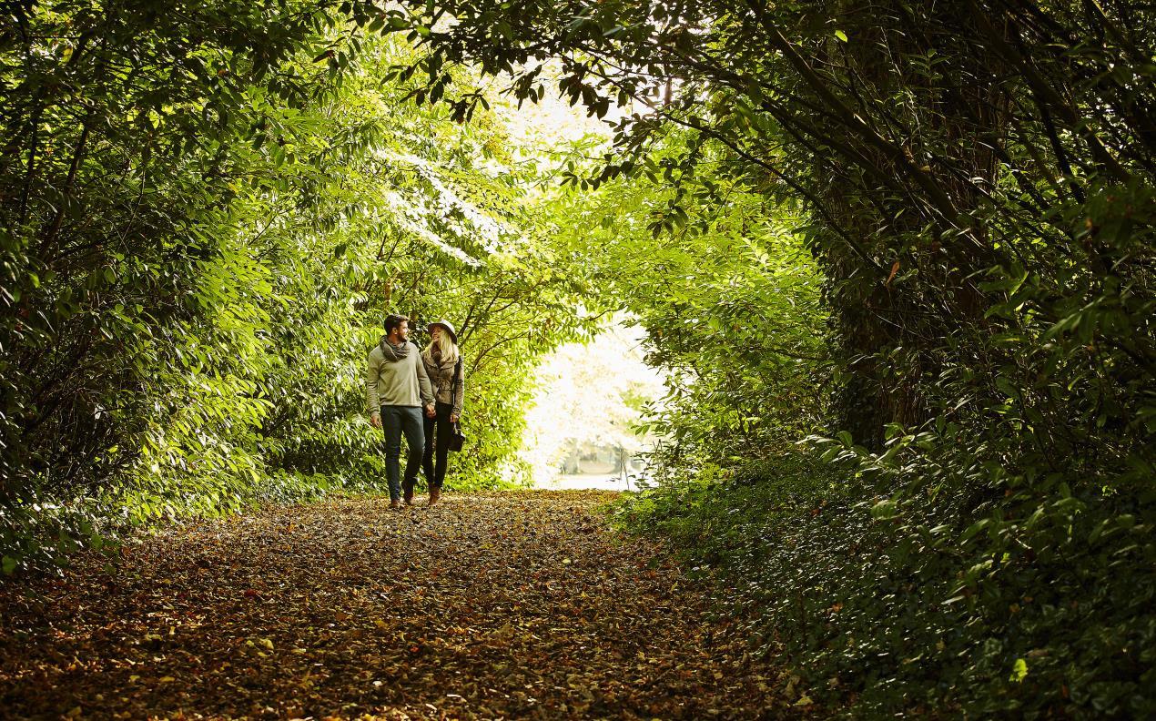 Lyrath Estate Autumn 2