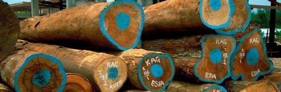 Governança florestal caminha devagar nos principais países produtores, mostra relatório