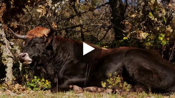 Un viaje de norte a sur a través de las relaciones entre bosques, animales y personas.