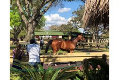 Buyers watch horses in the walking ring at the OBS March Sale