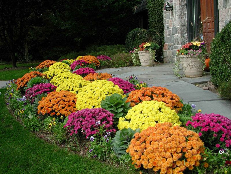 Fall Planting Virginia Beach