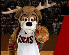 Bango the Buck