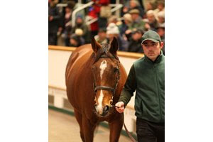 Thistle Bird in the ring at Tattersalls