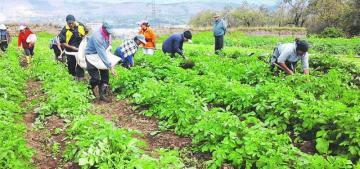 Ley de Cooperativas Agrarias contribuirá a la formalización de 250 mil pequeños productores en los próximos cinco años