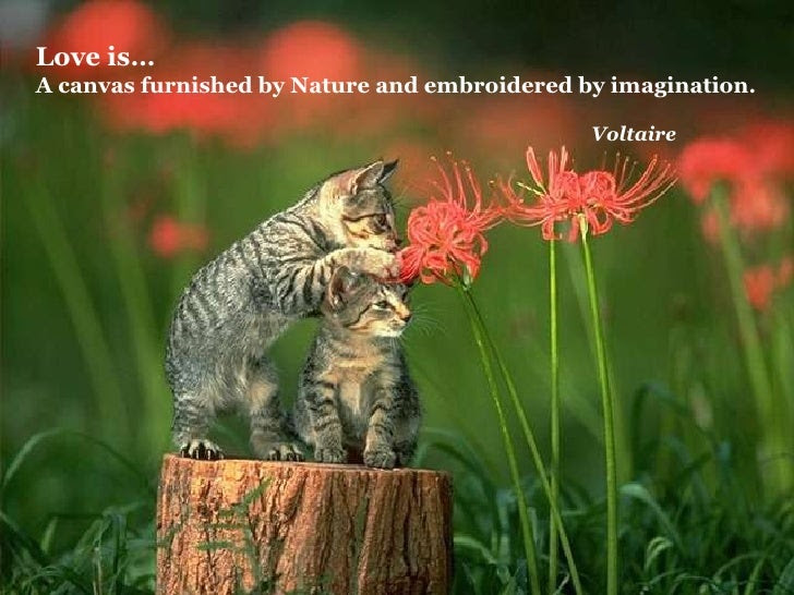 Love is … A  canvas furnished by Nature and embroidered by imagination.  Voltaire