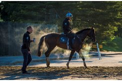 Chad Brown follows one of his trainees at Belmont Park