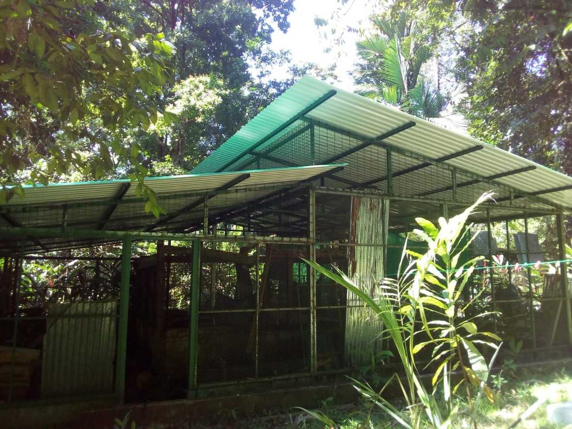Building in the rainforest