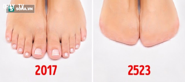 Ngón chân,cơ thể con người,sự tiến hóa