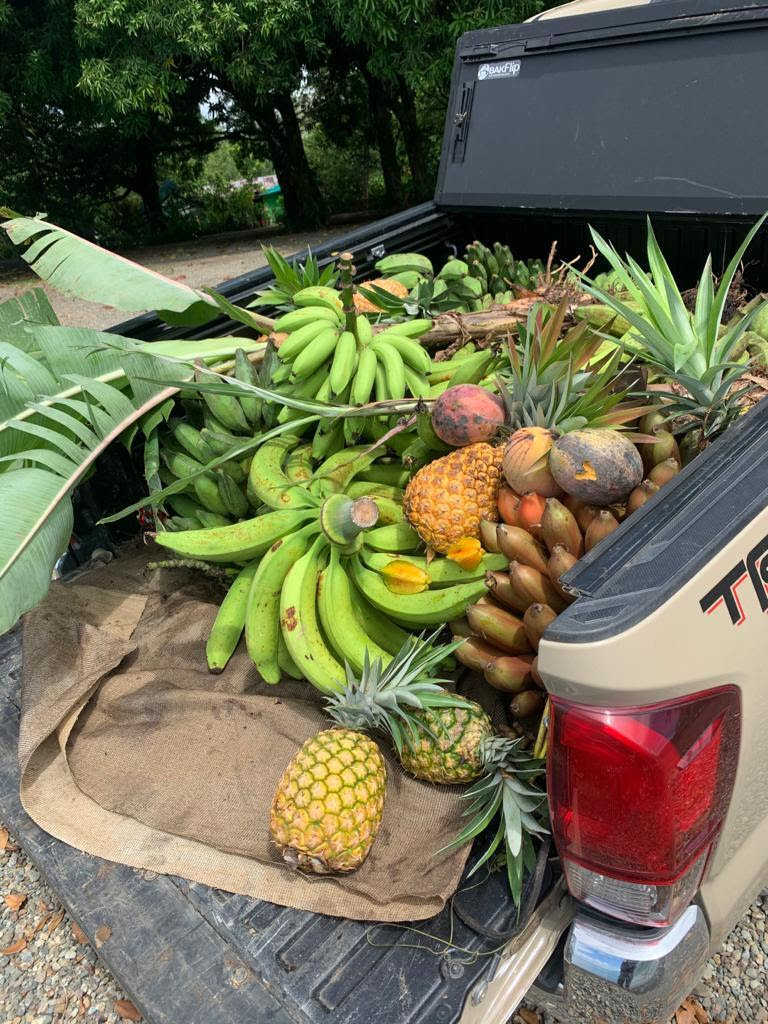 A truck bed full of fruit, including bananas, mangos, and pineapples