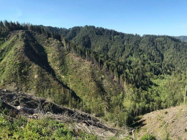 Elliot State, Oregon. Foto Matthew Betts