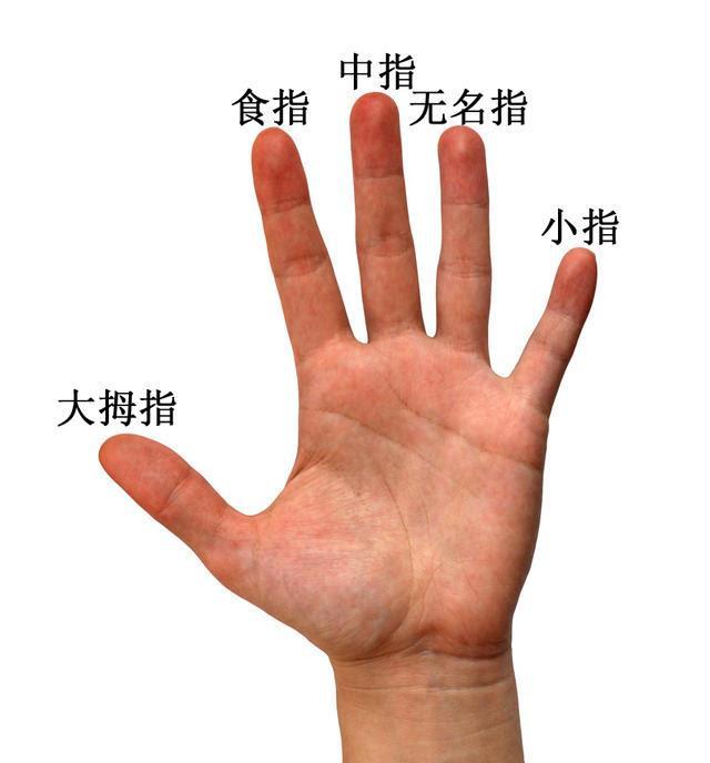 Dấu hiệu cảnh báo cơ thể có bệnh thể hiện trên 5 ngón tay: Hãy xem ngay để khám kịp thời - Ảnh 1.