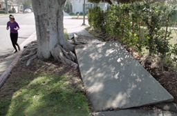 Safe Sidewalks LA