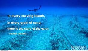 Image result for creation in a grain of sand
