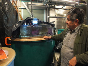 NOAA's Gordon Garcia shows one of the tanks that is being used to hatch and culture market squid in the wet lab at Ted Stevens Marine Research Institute. (Photo by Matt Miller/KTOO)