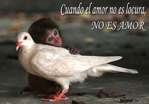 Cuando el amor no es locura, no es amor