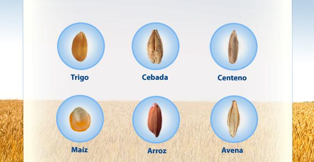 Trigo, cebada, centeno, maíz, arroz, avena