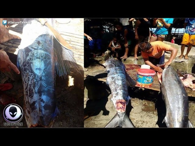 BIZARRE Markings On Fish Caught In Philippines! 5/6/17  Sddefault