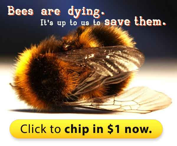 Bees are dying. It's up to us to save them.