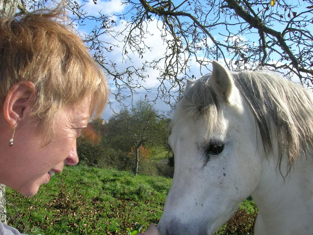 Une partie de mes chevaux  Dan-eclair-571a7c