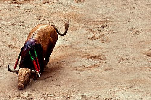 Es un día maravilloso para los toros