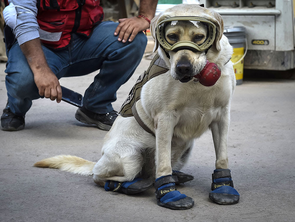 %7B6f9d00a5-aea3-4a39-81b6-40940ae516aa%7D_DailyWrap_Image_0420170925_enUS_1506369947 - Rescue Dog in Mexico City - Photos Unlimited