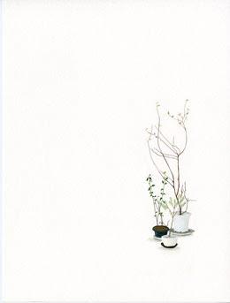 marill---house-plant-1