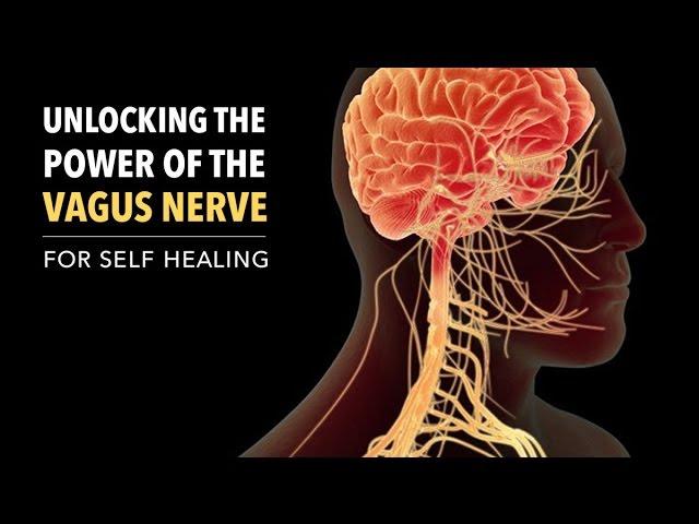 Unlocking the Power of the Vagus Nerve  Sddefault