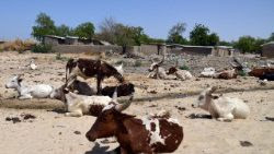FILES-NIGERIA-SAHEL-AGRICULTURE-DROUGHT-UNREST