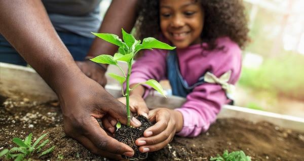 Start seeding!