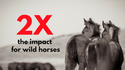 2X the impact for wild horses