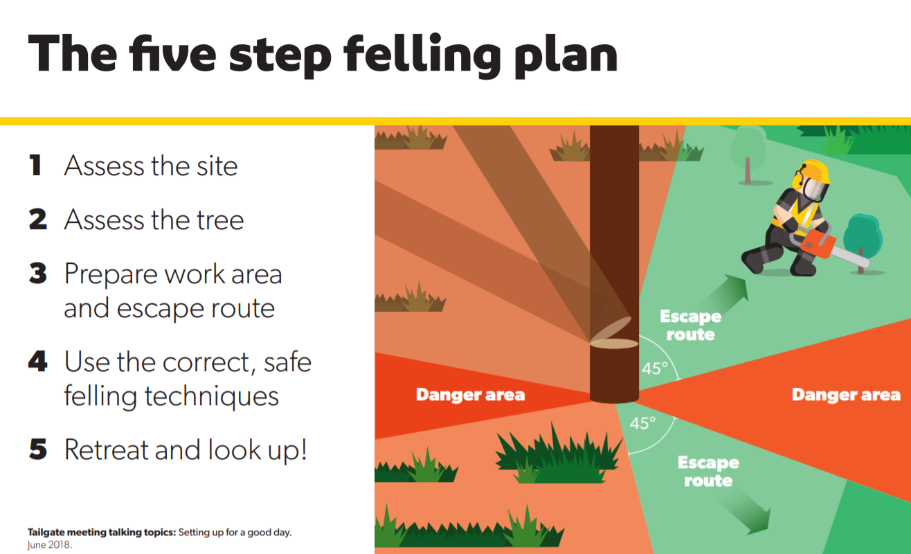 New tree-faller game, five-step felling plan, conference