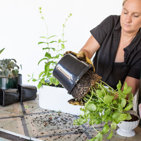 Step 3: How To Create Your Own Herb Garden