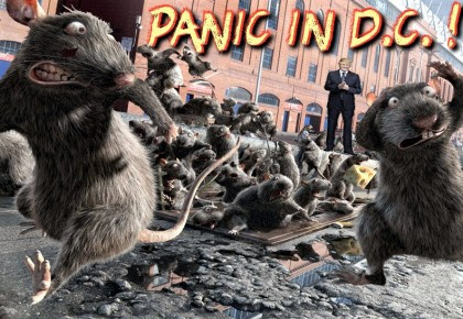 rats in washington